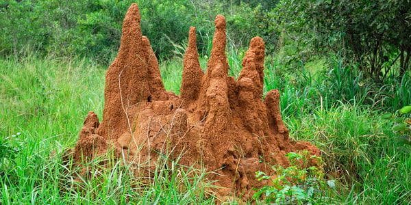 How to Get Rid of Termites Home/Pest Control/How to Get Rid of Termites