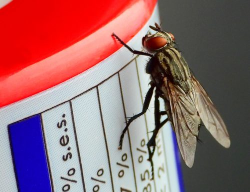 Why and How to Stop the Fly