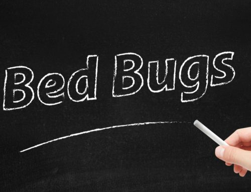 Bed Bugs Control: How to Get Rid of Bed Bugs
