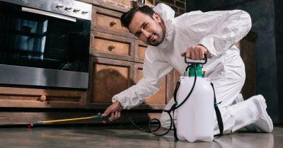 kitchen-pest-control