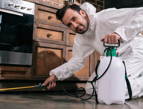 Kitchen Pest Control Tips