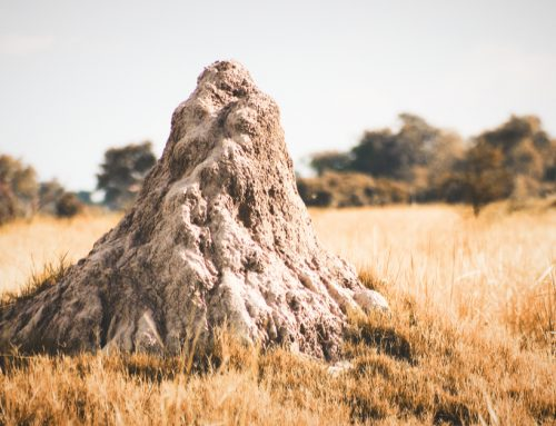 Does Termidor really work as termite and ant killer?