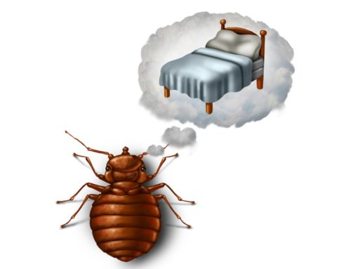 Secrets From Bed Bug Exterminators