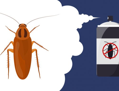 Fendona 60 SC Insecticide
