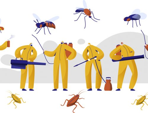 Tips for Choosing the Right Pest Control Service
