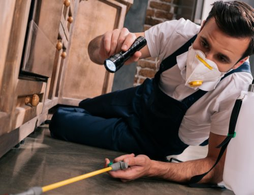 3 Questions to Ask Before Hiring a Pest Control Company