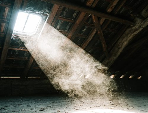 Hearing Noises in Your Attic or Loft? A Sign of Pests