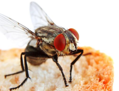 How to Keep your Restaurant's Kitchen Free From Flies