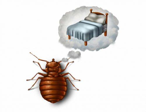 Do you know how to prepare for bedbug treatment?